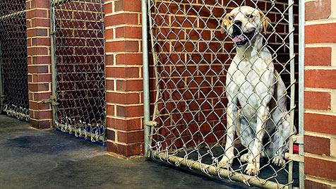 Nach diesen Kriterien suchen wir Haustiere aus (Bild: thinkstockphotos.de)