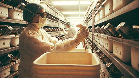 Grüne kritisieren Novelle zum Tierversuchsgesetz (Bild: thinkstockphotos.de)