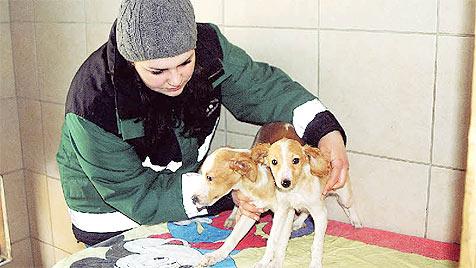 Keine Strafe für quälerische Haltung von 53 Hunden (Bild: Claudia Terk)
