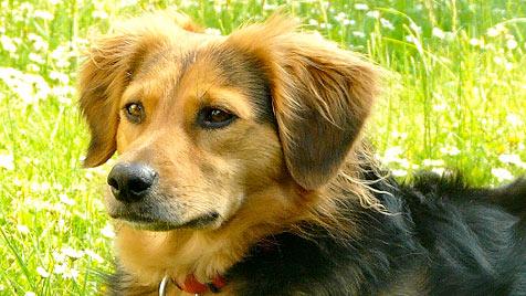 """""""Animal Care International"""" lädt zum Maifest ein (Bild: Renate Grell)"""