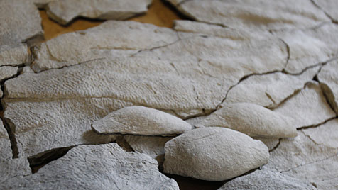Fossil von bis dato unbekannter Art in den USA entdeckt (Bild: dapd/AP/The Cincinnati Enquirer, Gary Landers)