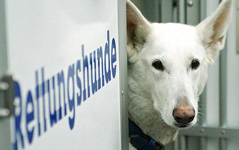 Was Rettungshunde und ihre Führer leisten (Bild: dapd/Martin Oeser)
