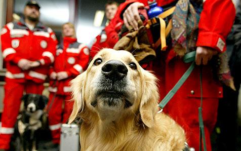 Was Rettungshunde und ihre Führer leisten (Bild: dapd/Thomas Lohnes)