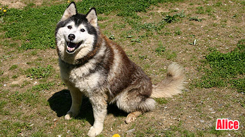 Hunde suchen ein neues Zuhause (Bild: Tierschutzverein St. Pölten)