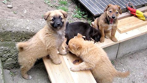 Das wurde aus den geretteten Hunden vom Dechanthof (Bild: Tierheim Dechanthof)
