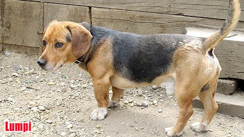 Hunde suchen ein neues Zuhause (Bild: Tierhilfe Hütehund)
