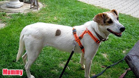 Hunde suchen ein neues Zuhause (Bild: Tierhilfe Süden)