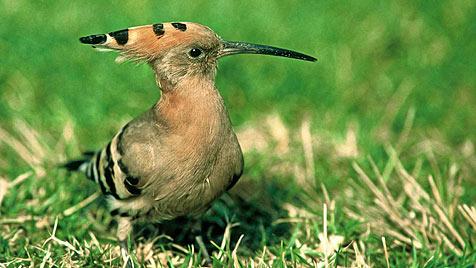 Preis für Gemeinde mit bester Artenschutzidee (Bild: Peter Buchner/BirdLife)