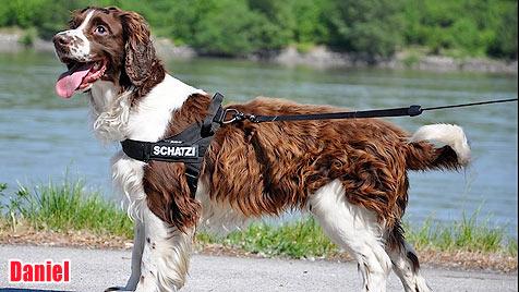 Hunde suchen ein neues Zuhause (Bild: Animal Hope)