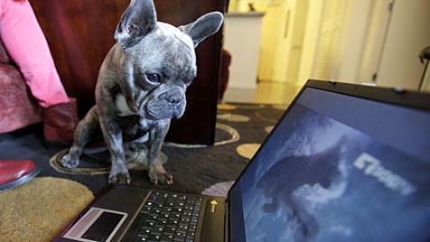 US-Sender Dog TV macht Programm für Vierbeiner (Bild: dapd)