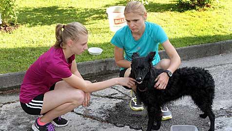 Hunde trotz Hitze in Autos eingesperrt - ein Tier verendet (Bild: Markus Tschepp)