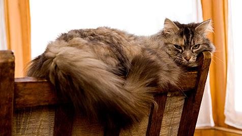 Darauf muss bei der Katzenhaltung geachtet werden (Bild: thinkstockphotos.de)