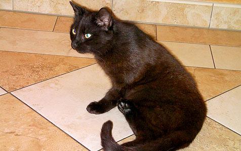 """Pflegestelle für behinderte Katze """"Froschi"""" gesucht (Bild: Bettina Stoifl)"""