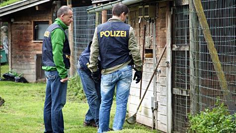 """Sbg: Geparden für Gehege-Umbau auf """"Sommerfrische"""" (Bild: APA/Neumayr/MMV)"""