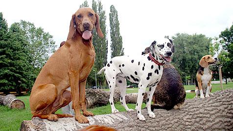 Der Hund stirbt - die Steuer wird in Wien trotzdem fällig (Bild: Martin A. Jöchl)