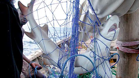 Weltmeerestag: 80 Prozent der Meere sind überfischt (Bild: WWF Canon/Jason Rubens)