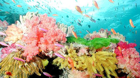 Weltmeerestag: 80 Prozent der Meere sind überfischt (Bild: Catherine Holloway/WWF)