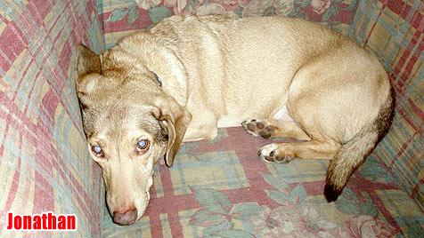 Hunde suchen ein neues Zuhause (Bild: Tullner Pfotenhilfe)