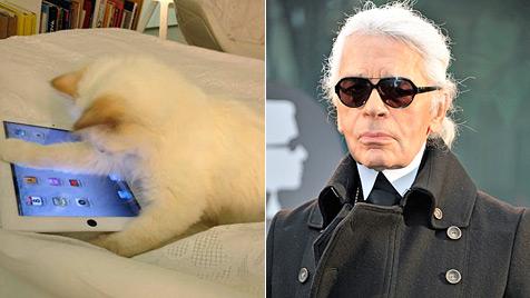 Karl Lagerfelds Kätzchen Choupette wird so verwöhnt... (Bild: Twitter, EPA)