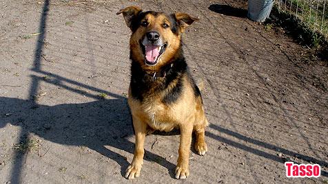 Hunde suchen ein neues Zuhause (Bild: Tierschutzverein Burgenland)
