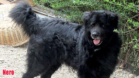 Hunde suchen ein neues Zuhause (Bild: Nothilfe f�r H�tehunde)