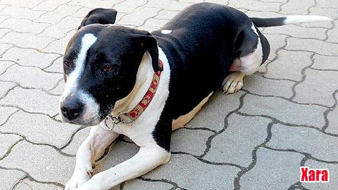 Hunde suchen ein neues Zuhause (Bild: Tierheim Baden)