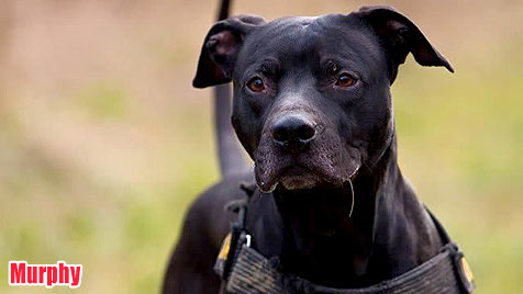 Hunde suchen ein neues Zuhause (Bild: Wiener Tierschutzhaus)