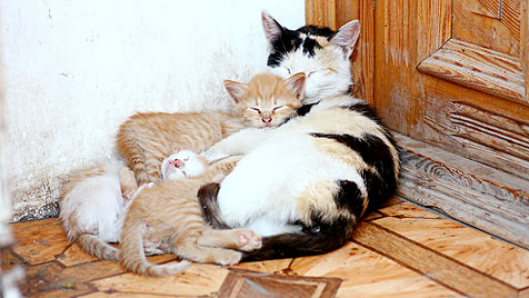 USA: Katzenmutter beschützt trotz Kugel im Kopf Junge (Bild: thinkstockphotos.de)