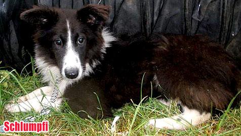 Hunde suchen ein neues Zuhause (Bild: Tierschutzhaus Burgenland)