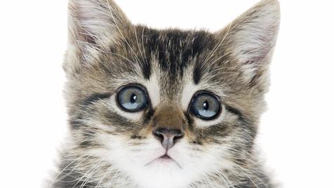 Was zu tun ist, wenn du verlassene Kätzchen findest (Bild: thinkstockphotos.de (Symbolbild))