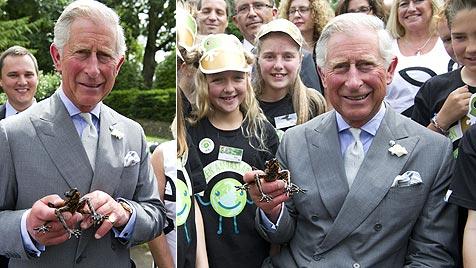 Seltener Frosch wurde nach Prinz Charles benannt (Bild: AFP)