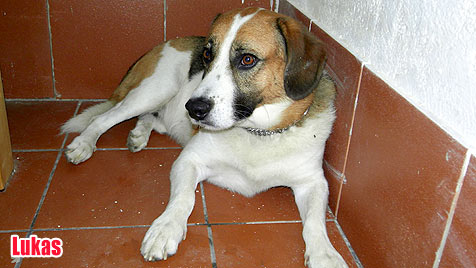 Hunde suchen ein neues Zuhause (Bild: Animal Care International, Renate Grell)