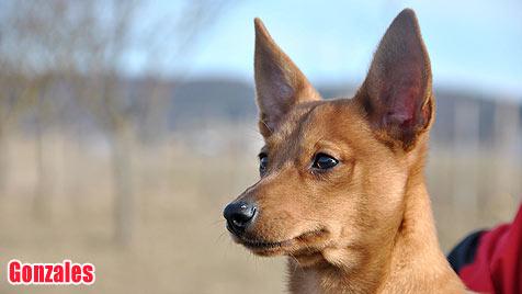 Hunde suchen ein neues Zuhause (Bild: privat)