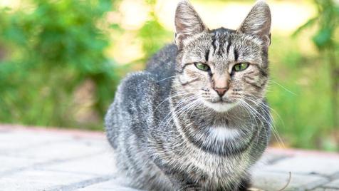 Was zu beachten ist, wenn Katzen in die Jahre kommen (Bild: thinkstockphotos.de)