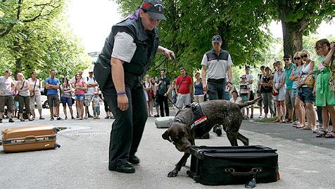 Tiergarten sponsert Ausbildung von Artenschutzhunden (Bild: Tiergarten Schönbrunn/Barbara Feldmann)