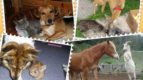 """Die """"Krone"""" und die Post suchen die schönsten Tierfotos (Bild: thinkstockphotos.de, krone.at-Grafik)"""