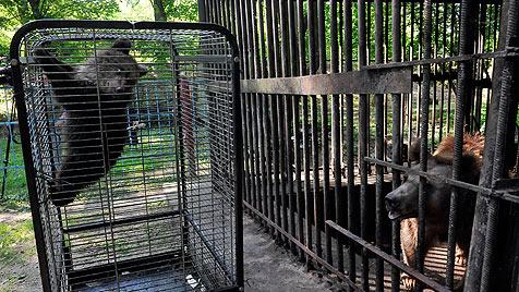 """Helfer kämpfen für Bärenbaby """"Nastia"""" und seine Mama (Bild: """"Vier Pfoten"""")"""