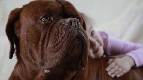 Infos zur Diskussion um Impfungen für den Hund (Bild: www.agila.de)