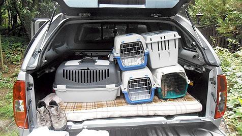 40 verwahrloste Hunde im Bezirk Tulln gerettet (Bild: Tierheim Dechanthof)