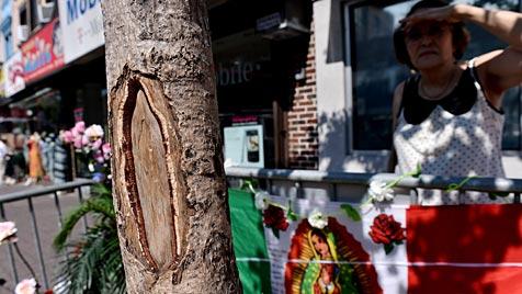 Gläubige pilgern zu Ginkgo-Baum nahe New York (Bild: EPA)