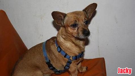 Hunde suchen ein neues Zuhause (Bild: Tierschutzverein Klosterneuburg)