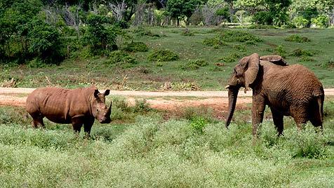 http://imgl.krone.at/Bilder/2012/07/25/Namibia_schickt_ueber_140_Wildtiere_nach_Kuba-Elefant._Loewe_und_Co.-Story-328884_476x268px_1_29Iqg34CL2vqs.jpg