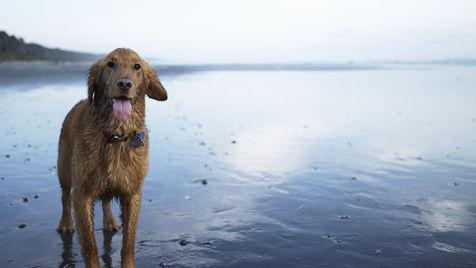 Sohaben Sie mit Hund Sommerspaß am Badesee (Bild: thinkstockphotos.de)