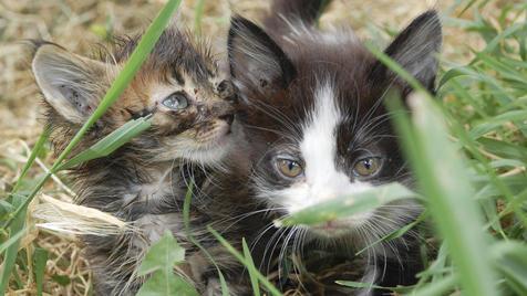 Stadt Wien vergibt Tierschutzaward 2012 (Bild: thinkstockphotos.de)