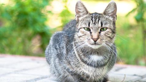 Das große Stubentiger-ABC zum Weltkatzentag (Bild: thinkstockphotos.de)