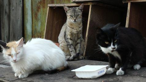 """Tierschützer fordern ausnahmslose Kastrationspflicht (Bild: """"Vier Pfoten"""")"""