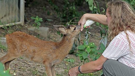 """Besuch beim Verein """"Kleine Wildtiere in großer Not"""" (Bild: Klemens Groh)"""