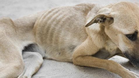 """Vier Pfoten"" orten ""Animal Hoarding"" im Burgenland (Bild: thinkstockphotos.de - Symbolbild)"