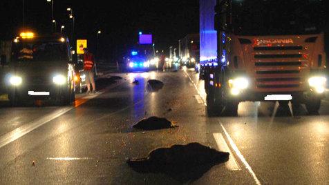 4 Autos kollidieren auf A1 in NÖ mit Wildschwein-Rudel (Bild: APA/PI ALTLENGBACH/SID NÖ)