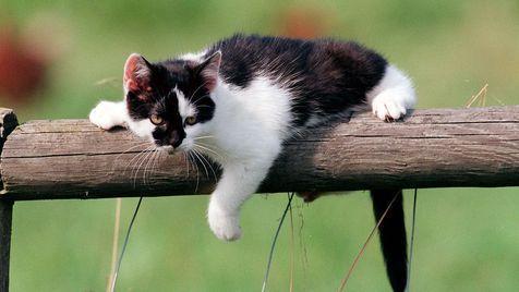 Katze in Kärnten Teil des Fells abgezogen (Bild: Peter Tomschi)